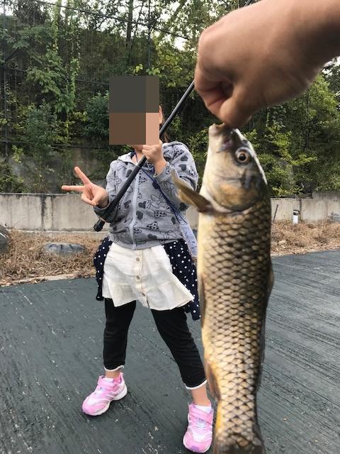 釣りパラダイス,鯉釣り