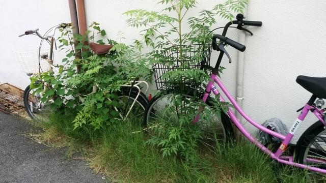 放置自転車 大家 どうする